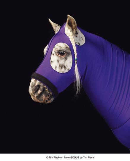 Equus (photos)