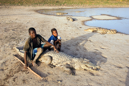 Crocodiles (photos)
