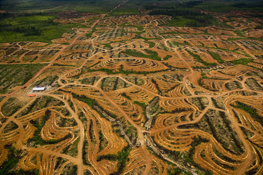"""Nouvelle plantation de palmiers à huile près de Pundu, Bornéo, Indonésie (1°59' S – 113°06' E) - © Yann Arthus-Bertrand / Film """"Home"""" – une coproduction Elzevir Films / EuropaCorp"""