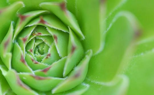 Thème : C'est vert - © Michel Lecocq - 1er du thème