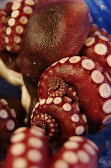 Poulpe torsade par ses tentacules. © Joël Da Costa Ferreira
