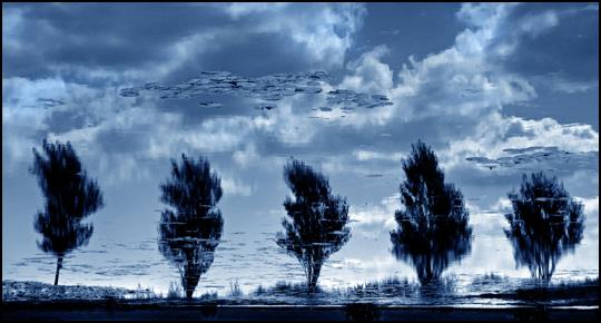 Un jour, les arbres flotteront dans le ciel • Patrice Carré