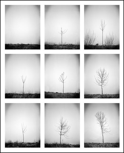 Reborn • Cyril Ruatta