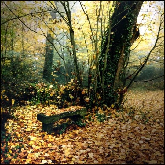 Le petit banc de pierre • Yvan Lemeur
