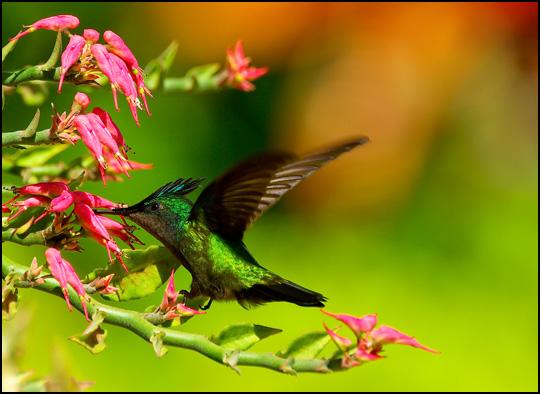 Comme un battement d'ailes... • Olivier Crispi
