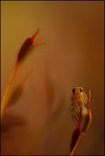 La mouche des mousses • Philippe Longueville