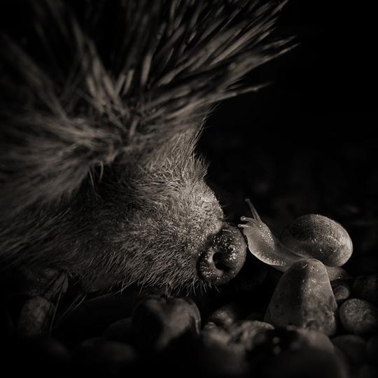 3EME PRIX © Alexandre Parrot