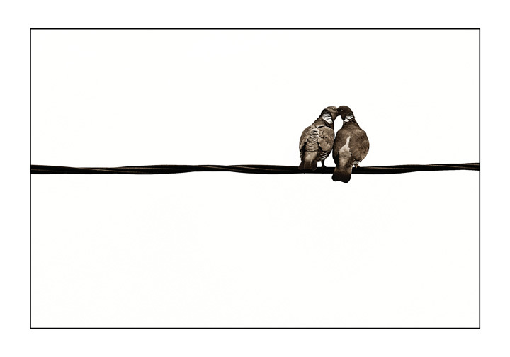 Le baiser sur le fil • Anthony Leforestier