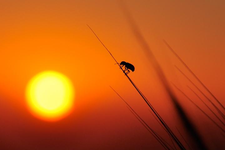 Voyage vers le soleil • Hamid Lemasra