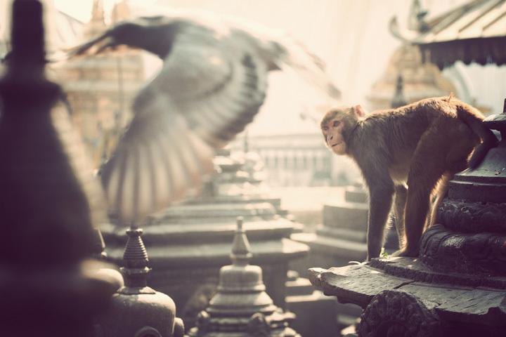 Monkey Temple. © Nicolas Rakotopare