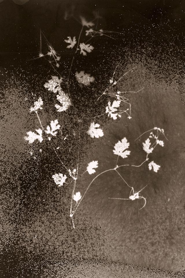 Tchernobyl Herbarium ou la beauté évanescente des radiations exposée par la photographe Anaïs Tondeur