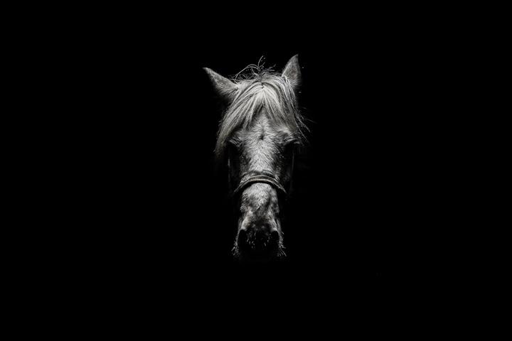 © Rémi Chapeaublanc - Tous droits réservés