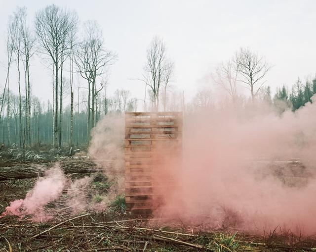 Le chant du cygne immortalisé par la photographe Andrea Olga Mantovani