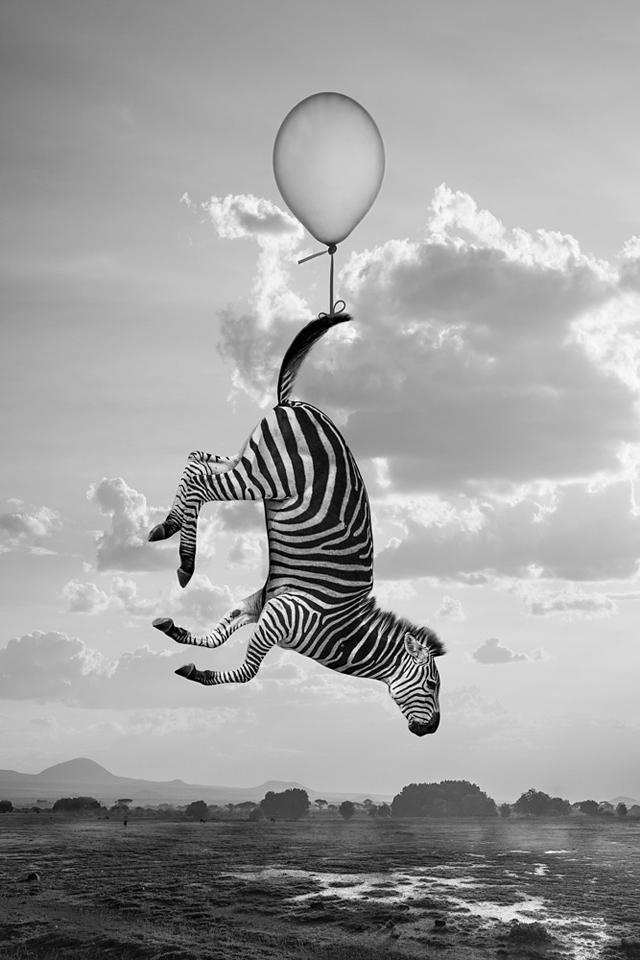 Hakuna Matata ou la vraie vie des animaux, de Thomas Subtil, à l'honneur aux Echappées Belles
