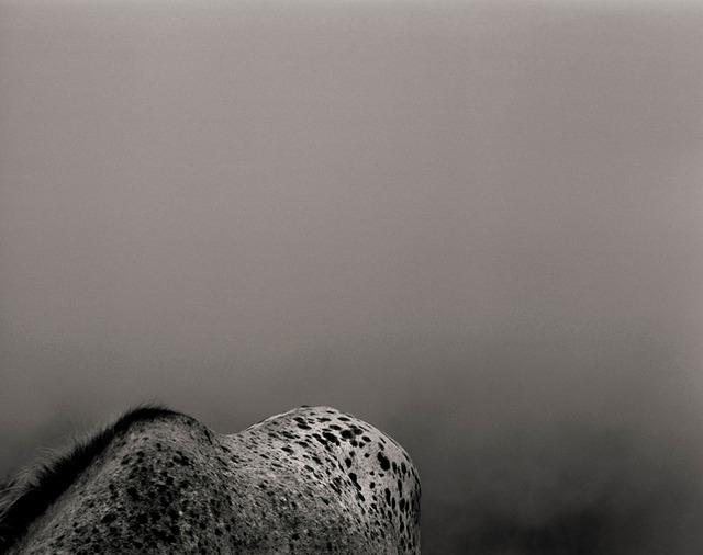 © Martial Lenoir - Tous droits réservés