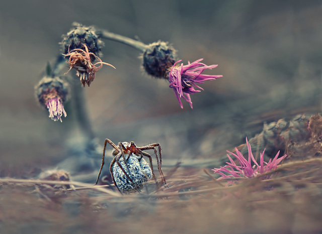 Krasimir Matarov (Bulgarie), catégorie Nature et Vie sauvage • Open Competition • 2013 Sony World Photography Awards