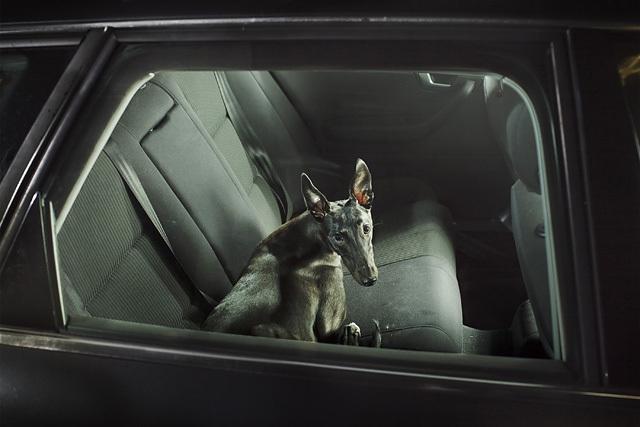 The Silence of Dogs in Cars • Martin Usborne (série)