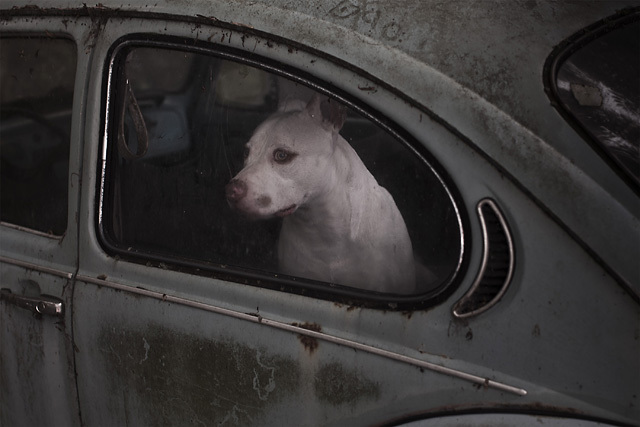 The Silence of Dogs in Cars • Martin Usborne (series)