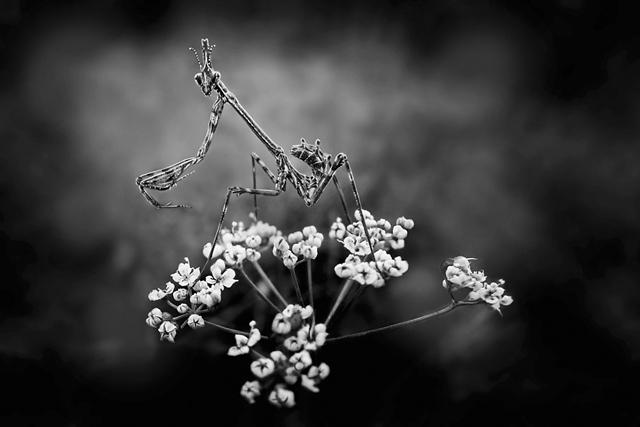 © Valerie Rachel
