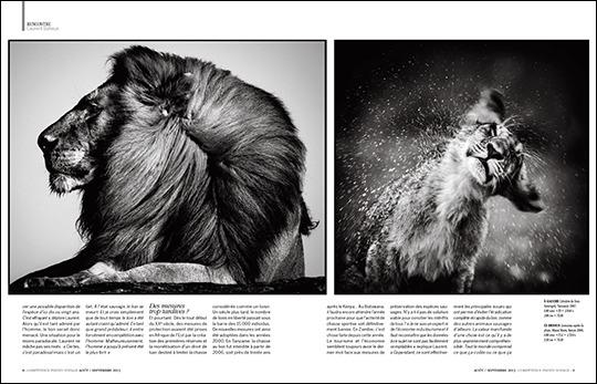 Peut-on encore sauver le Roi Lion ? (entretien avec Laurent Baheux, publié dans Compétence Photo Voyage)