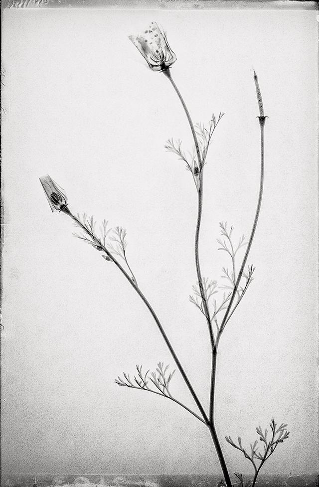 © Muhanad Baas (Provence)