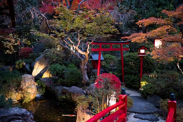 Participez à un voyage photographique au Japon et réalisez votre éditing avec Compétence Photo
