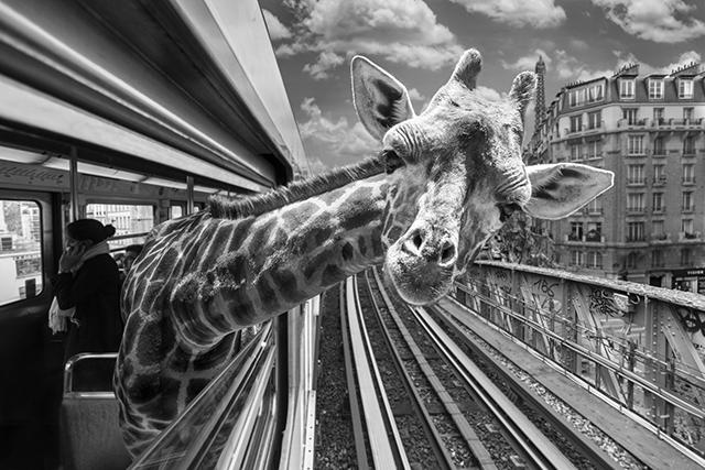 © Thomas Subtil - Tous droits réservés