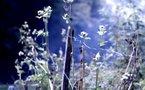 Nature filmée avec un Canon Eos 7d