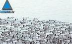 3 000 israéliens posent nus pour Spencer Tunick