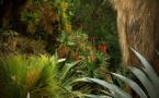 Pénétrez dans les jungles d'Olivia Lavergne au festival les Photaumnales (2/3)
