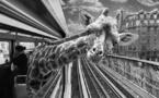 Animétro • Thomas Subtil et Clarisse Rebotier