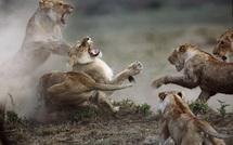 Vivante Afrique (photos)