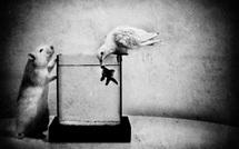 La colombe, le poisson et le rat • Jorris Martinez