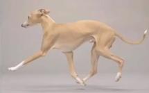 Comment photographier les chiens en studio ?