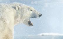 Etonnant : les photos du WWF animées avec la technique de la parallaxe