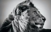 La photographie animalière en noir et blanc selon Laurent Baheux