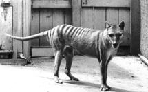 Les animaux disparus, par Errol Fuller