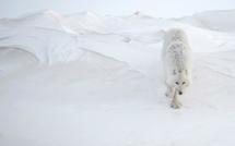 Les 15 lauréats des Photographies de l'Année édition 2014