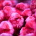 20110330113810_colored_chick_magenta.jpg