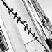 20120214205743_lx5_birds_on_a_wire_1020074